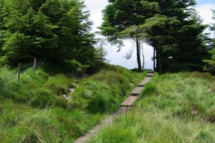 Boardwalk above Glendalough