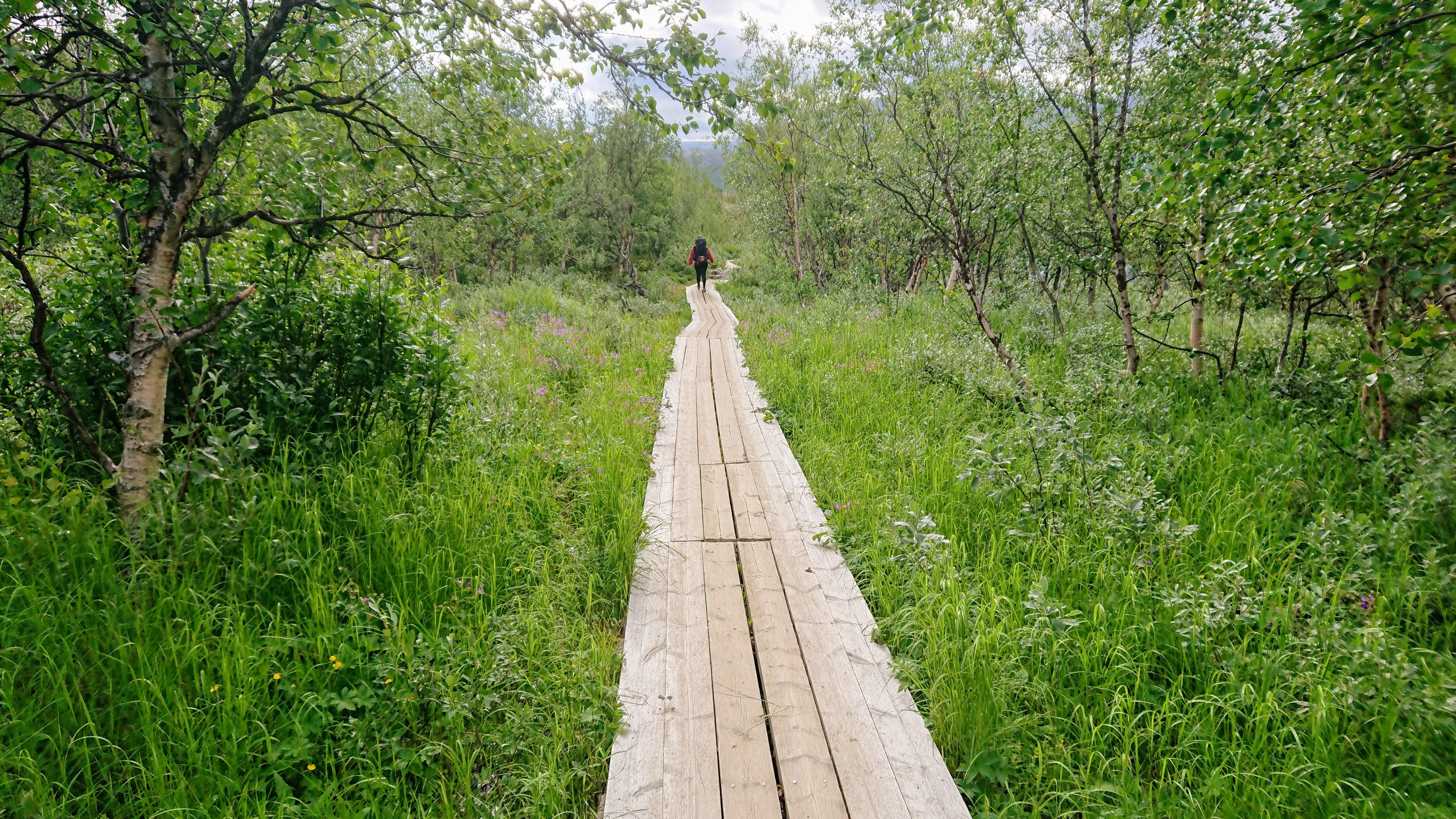 Final stretch to Nikkaluokta